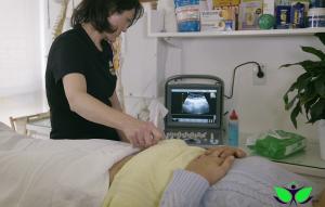 Real Time Ultrasound - RTUS 2